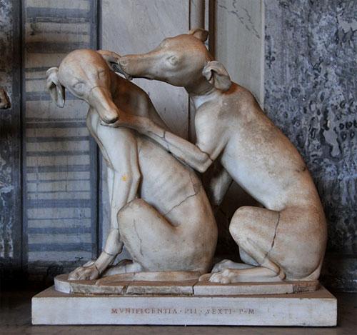 Canis vertragus