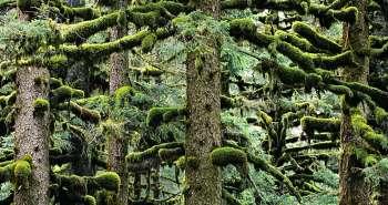 Άγρια φύση στην Αλάσκα.