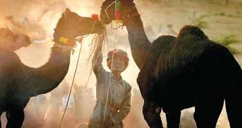 camel_20111201