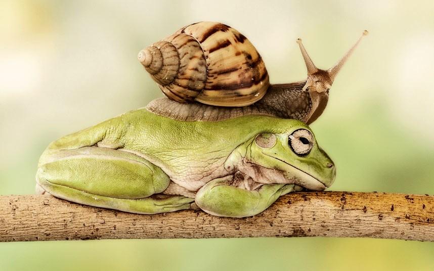 Το σαλιγκάρι χρειάστηκε οκτώ λεπτά για να περάσει πάνω από  το βάτραχο.