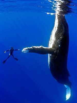 Μια φιλική φάλαινα