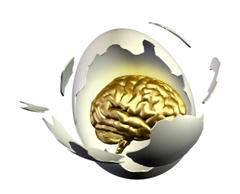 Birth-brain egg