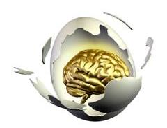 Birth-brain egg