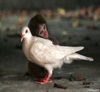 friend-animals