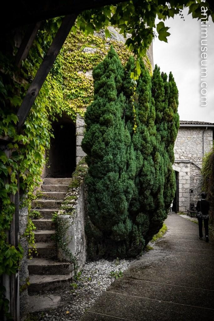 Saint Lizier trees