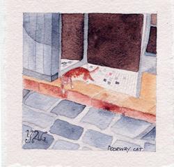 un chat dans un pas de porte à Douvres la Délivrande - Normandie