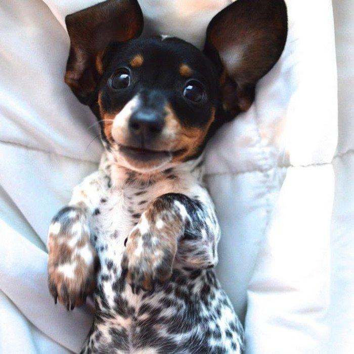 Три неразлучных друга: шикарные фотографии таких разных, но таких милых собак