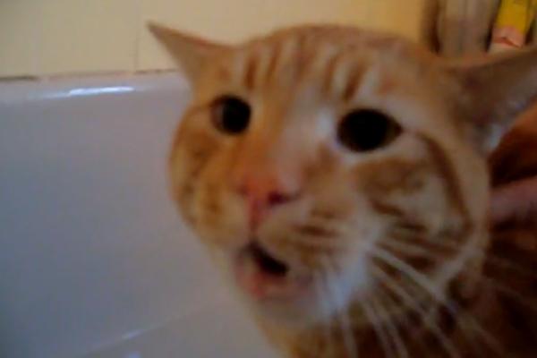 Если кот не хочет мыться – он способен на многое. Но такого хозяева явно не ожидали.