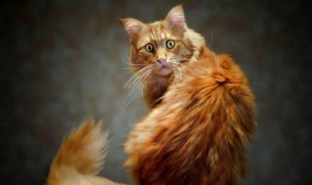 Пользователи делятся забавными историями, которые случились с их котами