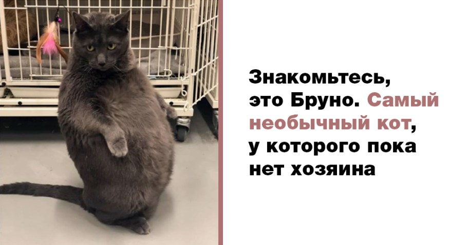 В Интернете гадают, кто станет новым хозяином необычного котяры Бруно?