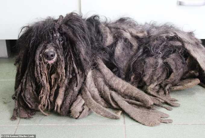 Польские зоозащитники нашли странное лохматое существо. Посмотрите на эту славную мордаху сейчас