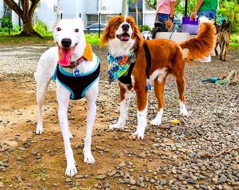 Девушка нашла на улице худого несчастного пса. Сколько счастья теперь в этой собачьей морде!
