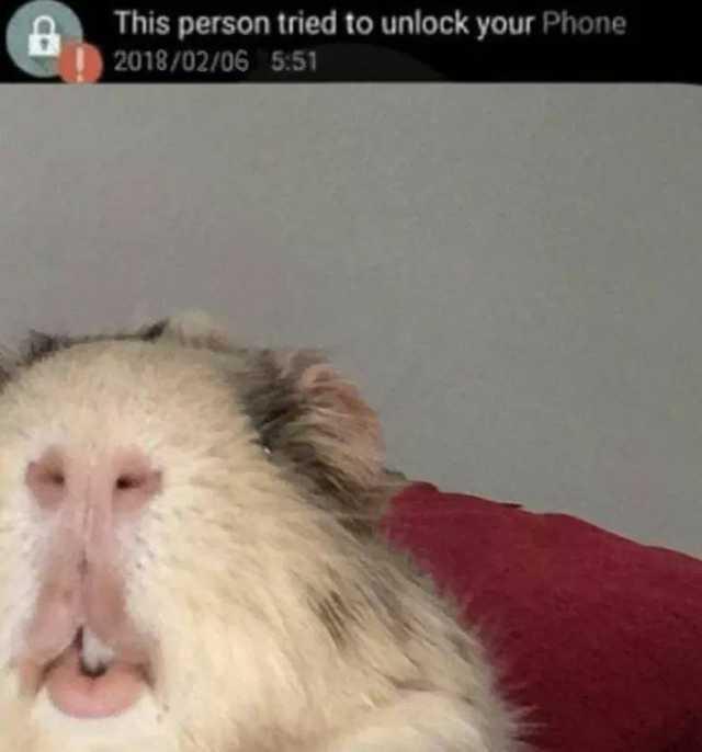 Пользователи Сети поделились неоднозначными снимками животных