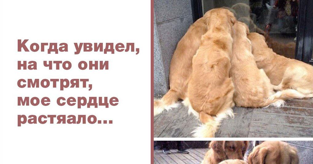 25 доказательств: ретриверы и лабрадоры – лучшие собаки в мире!