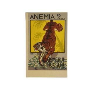 Cartolina glomeruli Ruggeri