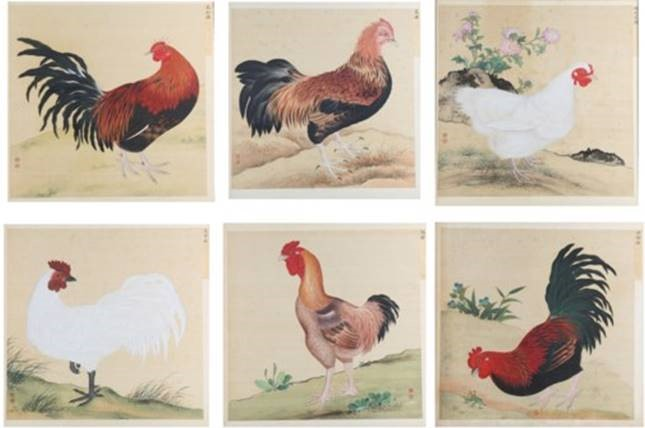 Imperial chickens paintings