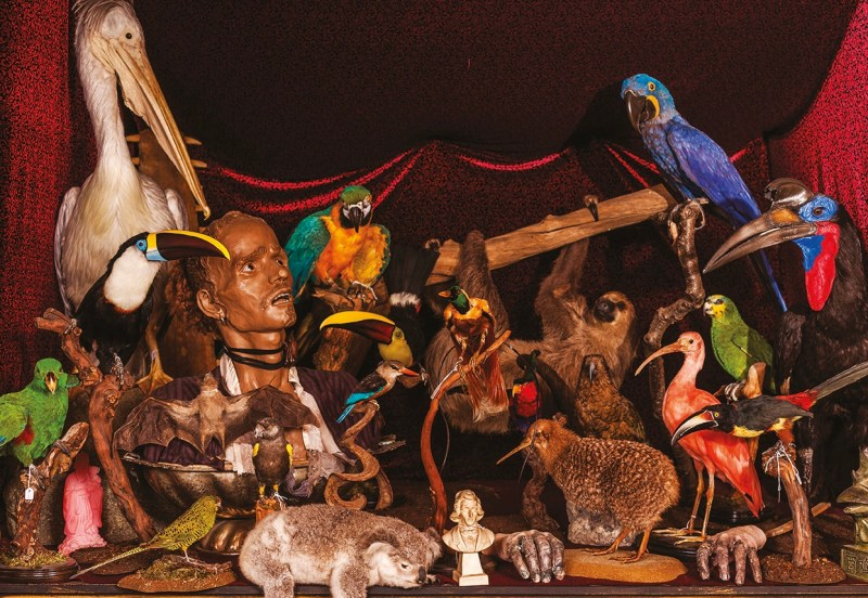 Taxidermy collection