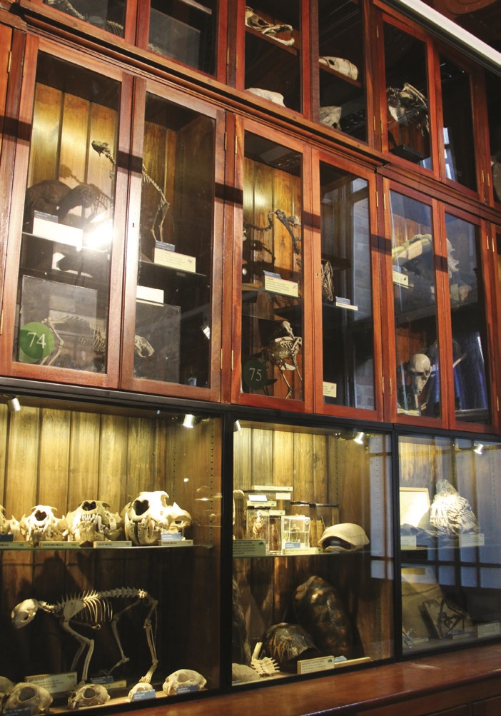 The Grant Museum of Zoology in London