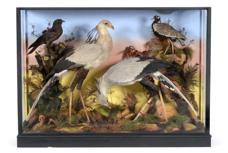 One of the antique taxidermy dioramas that have sold in North Yorkshire