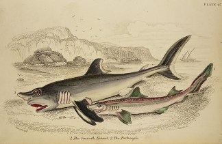 Naturalist Library - Fish & Crustaceans