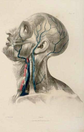 Anatomical Quain & Wilson