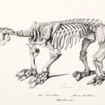 Palaeontology - Dinosaurs, Fossils,