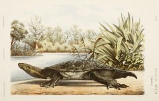 Reptiles - Turtles & Tortoises