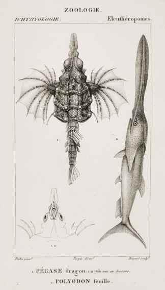 Fish & Crustaceans