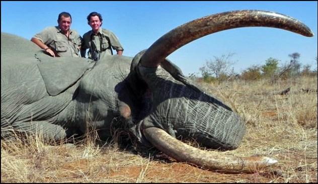 Comment reconnaitre l'ivoire, éléphant mort pour son ivoire