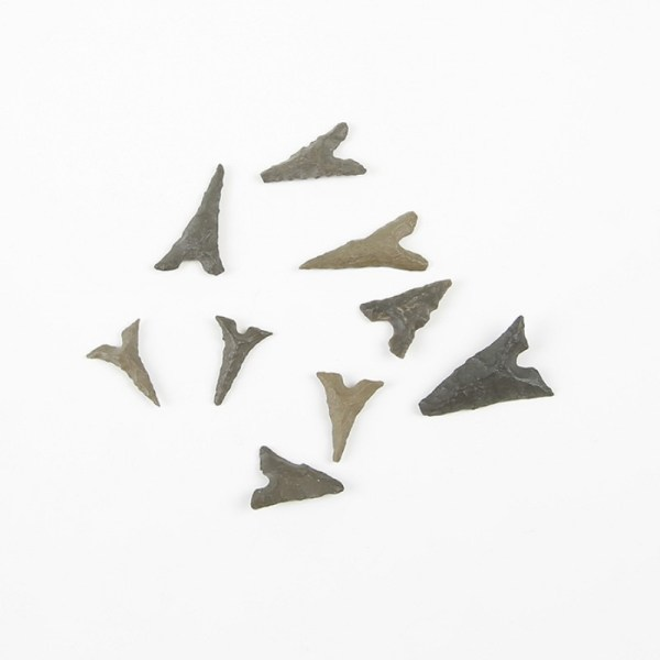 Prehistoric Baby Shark Teeth