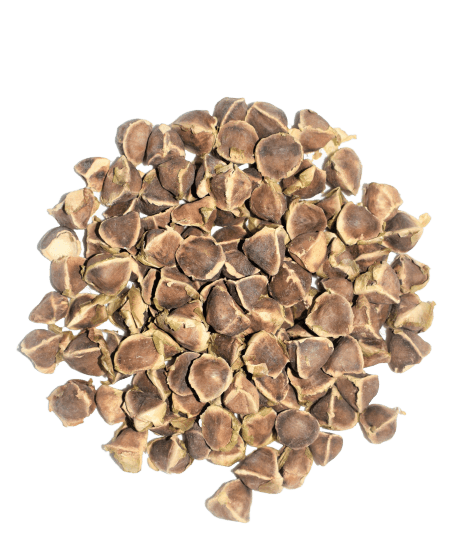 les graines de moringa