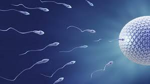 Le liquide pré-séminal peut-il enceinter