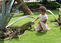 Paul Marshman (@Travel_boomer) of Canada took this photo of a little girl petting iguanas in Ecuador. Is she the iguana whisperer? pic.twitter.com/sGKyqWCGv5