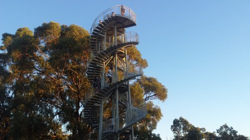 Climb the DNA Tower in Kings Park to have an amazing view over Perth : )