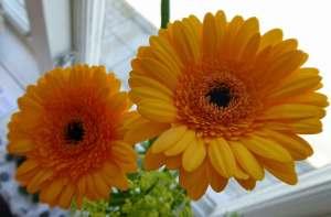 Blommor av Handkraft
