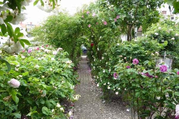 Lenas rosor i Fjällbacka