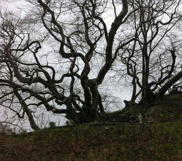 Trädformer att brodera