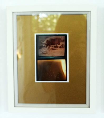 Pavo (vii) pigs - digital print on Ilford Galerie Metallic Gloss 260gram paper, edition of 1