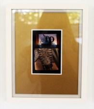 Pavo (x) shining cuckoo - digital print on Ilford Galerie Metallic Gloss 260gram paper, edition of 1