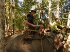 Elephant Trekking Yok Don, Central Highlands, Vietnam