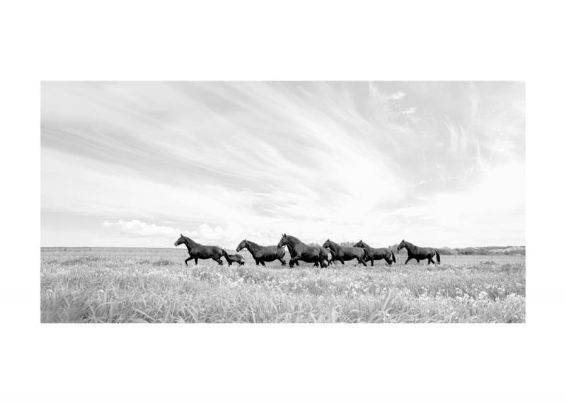 Menorquin Horse: #012