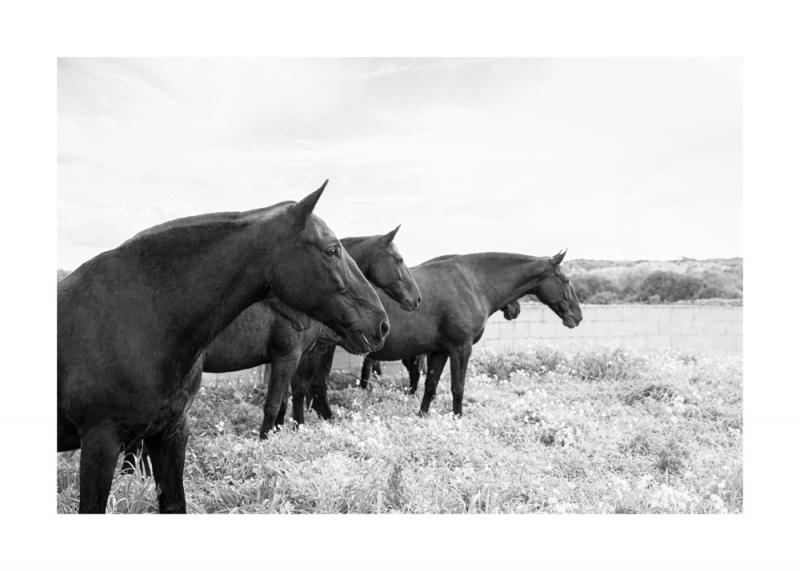 Menorquin Horse: #009