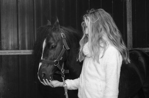 Tiny black stallion nuzzles girl's hand