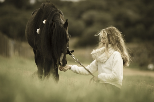 Girl and black pony stallion in a field of wheat
