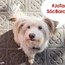 perro barcelona