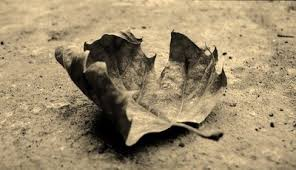 hojas muertas 2