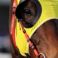 Breve guía para apostar en las carreras de caballos del arte dramático