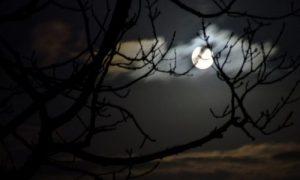 Gambar dari diamonita.blogspot.com