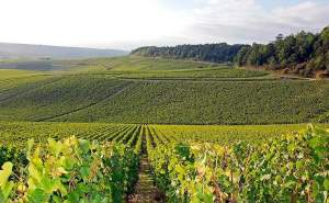 3 Star Hotel with potential to expand & part of a Vineyard