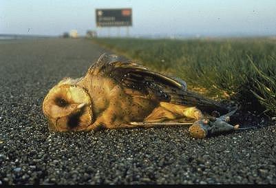 Animali e macchine, somiglianze e strategie per diminuire le vittime del traffico.